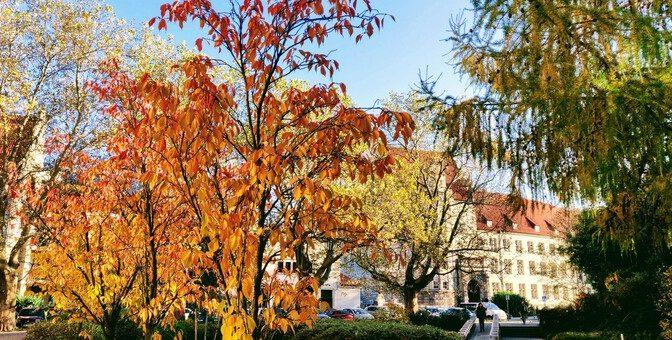 Jesień nakampusie